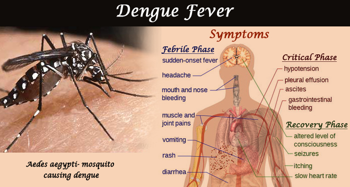 Understanding Dengue fever in kids! – Kalp